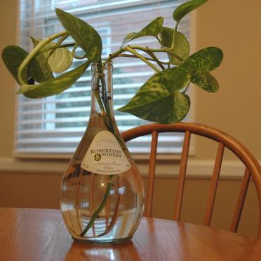 Ivy planted in water indoor plants pinterest for Low water indoor plants